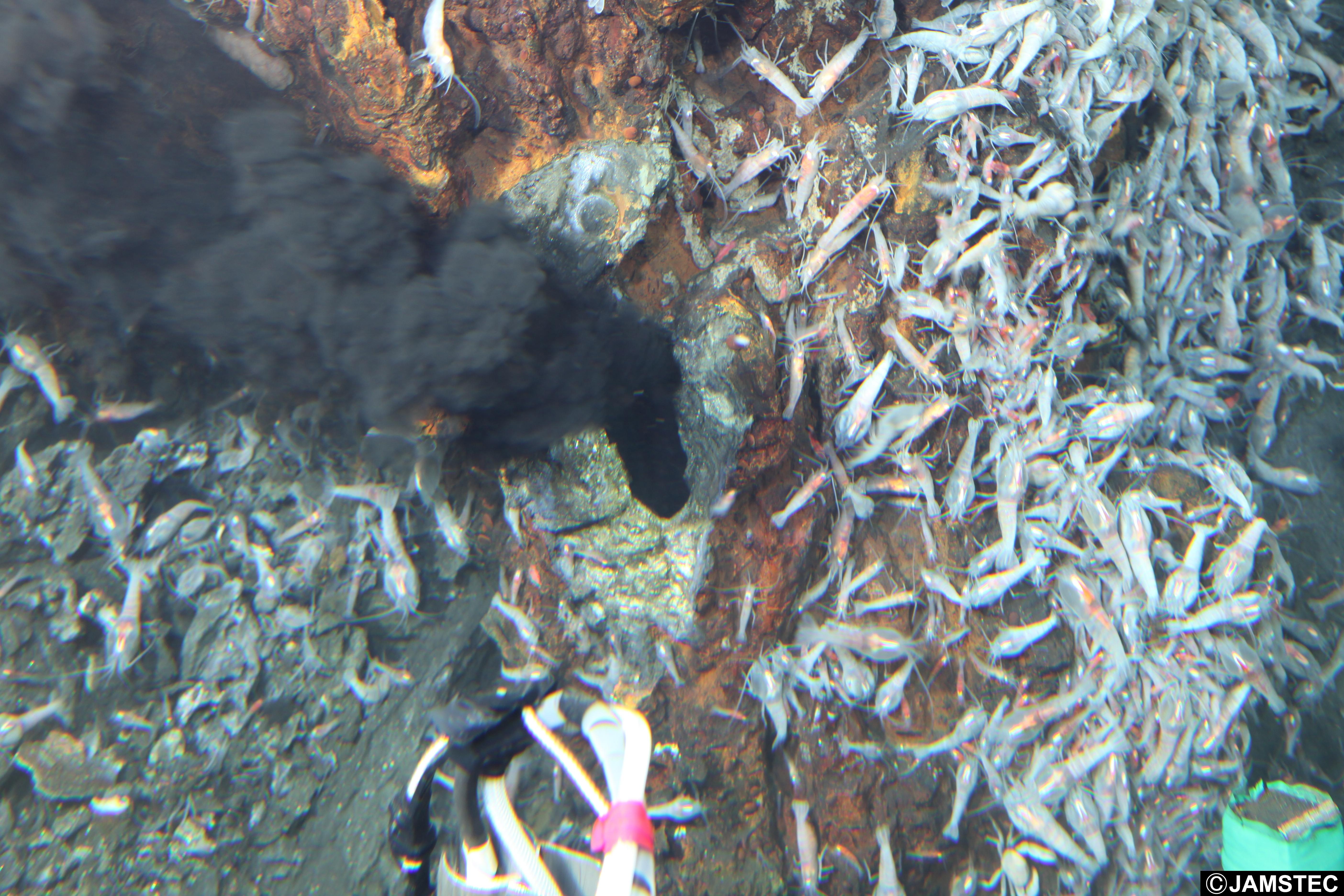 Hydrothermal vent (Photo Credit: JAMSTEC)