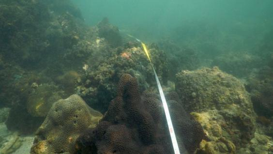Coral communities are measured during the trip.